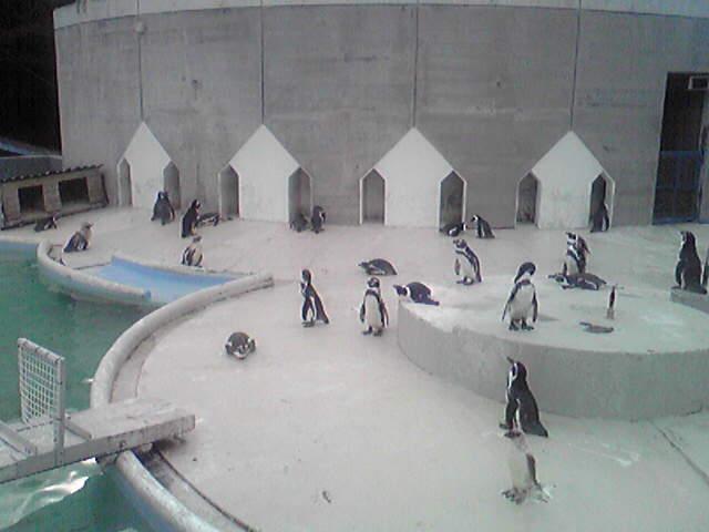 ドキッ!ペンギンだらけの水族館大会!!
